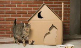 Como Fazer uma Casinha para o Gato
