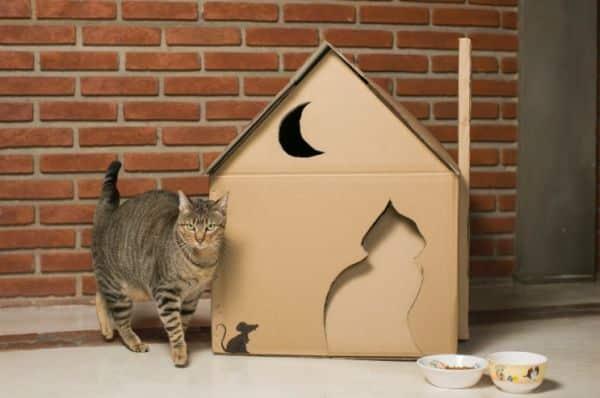 Read more about the article Como Fazer uma Casinha para o Gato
