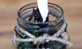 Como Fazer um Minijardim no Pote de Vidro