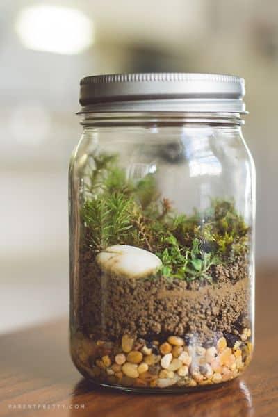 Terrário em pote de vidro é diferente, mas lindo (Foto: parentpretty.com)