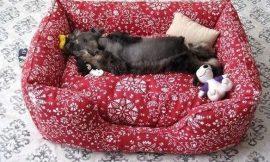 Como Fazer um Sofá para Cachorro
