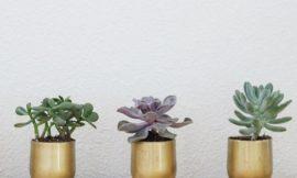 Como Fazer Vasos de Suculentas com Copos