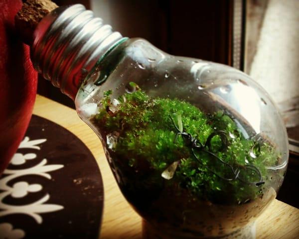 terrario na lampada com musgo
