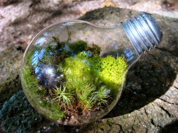terrario na lampada com planta