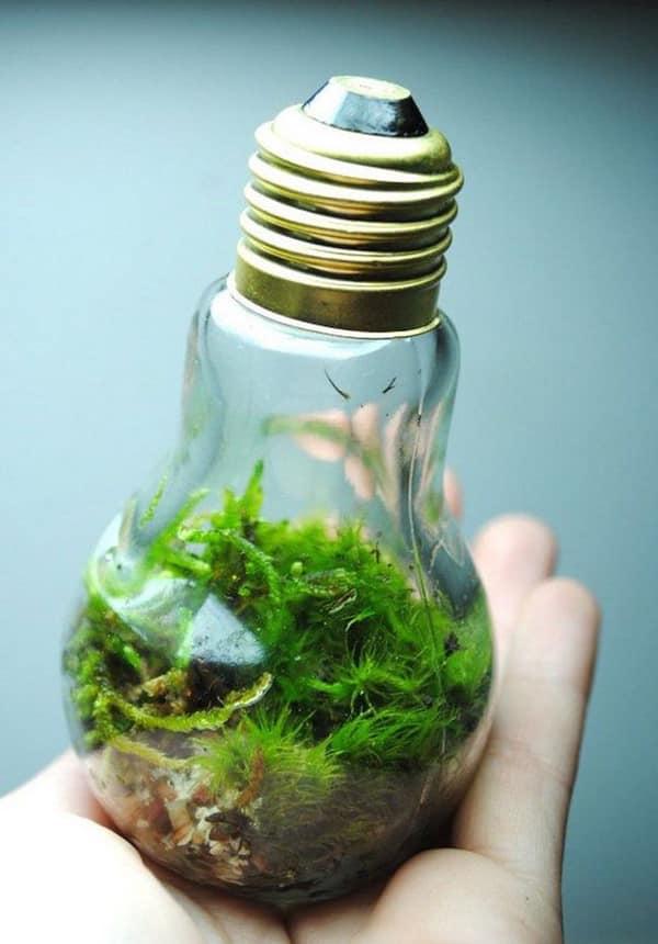 como fazer terrario na lampada