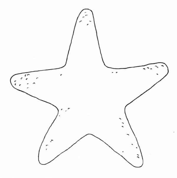 molde estrela do mar