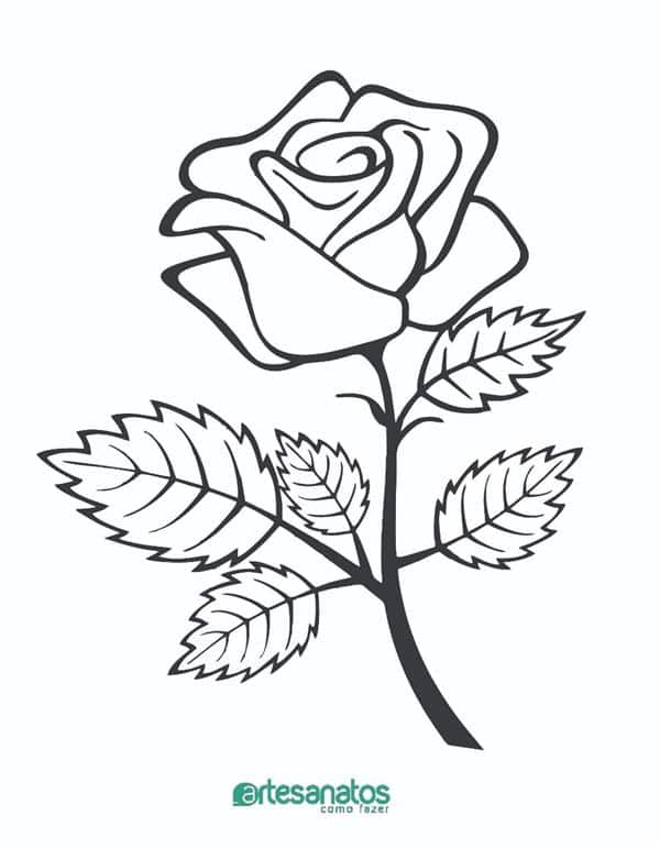 desenhos de rosas para imprimir