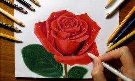Desenhos de Rosas para Imprimir: tatoo, realistas, pintura em tecido