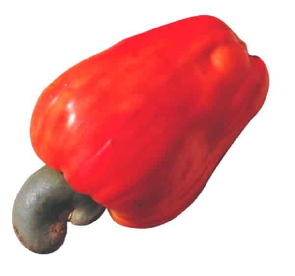 molde de frutas coloridas