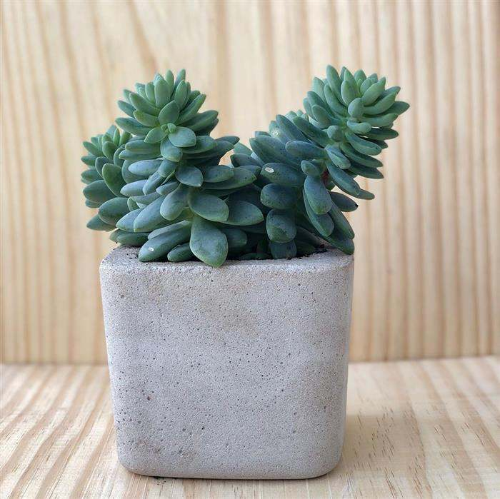vasos de cimento simples