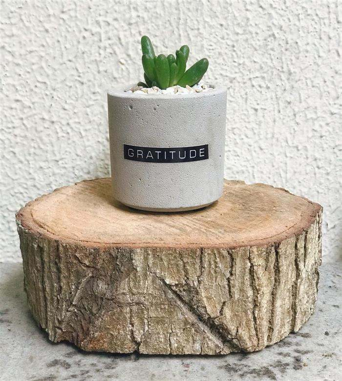 vasos de cimento suculentas