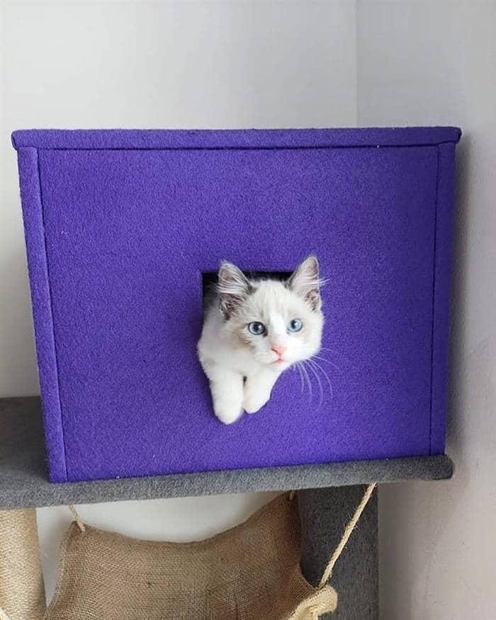 caixa para gatos
